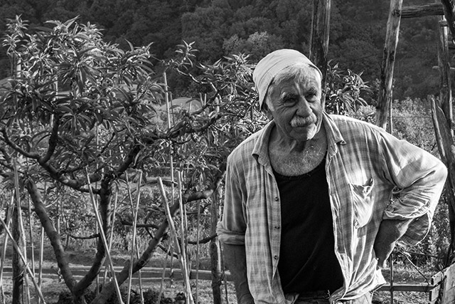 Giovanni, our Bull's Heart grower, in Liguria